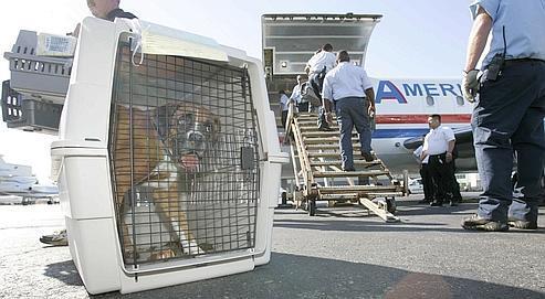 Un chien, sur le tarmac de l'aéroport de Teterboro (New Jersey), aux États-Unis.