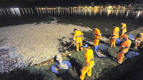 En février 2010, des milliers de poissons morts avaient été retrouvés dans le port de Rio de Janeiro, vraisemblablement tués par le froid.