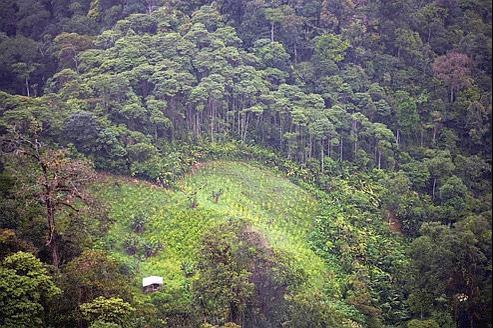 Depuis une vingtaine d'années,la culture de la coca est le principal facteur de déforestation devant l'élevage, l'agriculture ou l'exploitation minière en Colombie. Crédits photo: Luca Zanetti/LAIF-REA.
