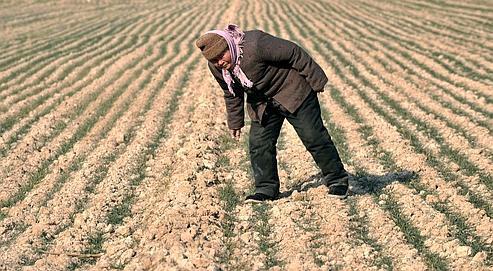 Il n'est tombé que12 millimètres de pluie depuis le mois de septembre dans la province de Shandong.