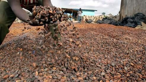Les cours du cacao dégringolent