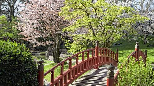Nature du Japon (French Edition)
