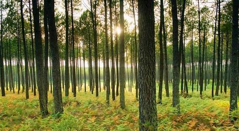 Actuellement, une famille sur sept possède au moins un bout de forêt en France. Crédits photo : Stanislas Fautré/Le Figaro Magazine