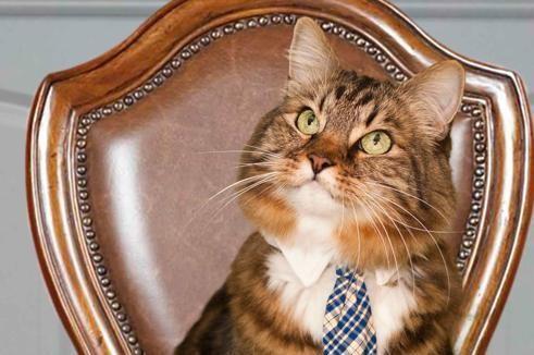 Les Français préfèrent les chats aux chiens. C'est ce qui ressort de la dernière enquête menée par l'institut TNS-Sofres