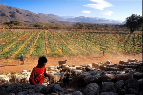 Franck Noël-Vandenberghe, le fondateur de Massena Partners, conseille l'investissement «dans des actifs réels et notamment dans les terres agricoles» Crédits photo : Eric Martin