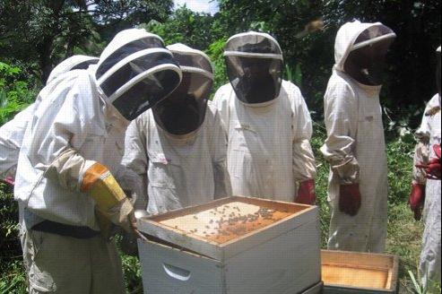 Aux États-Unis, les abeilles sont abondamment nourries avec du sucre de maïs (ici en blanc sur le couvercle de la ruche). (John's Beekeeping Notebook)