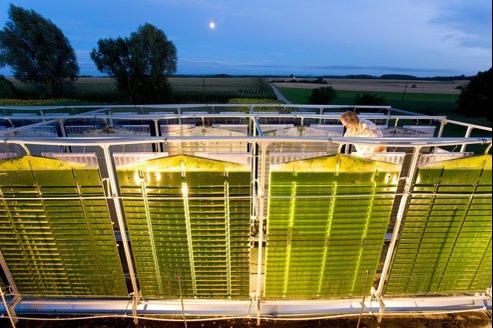 Un technicien vérifie des photobioréacteurs contenant des micro-algues.