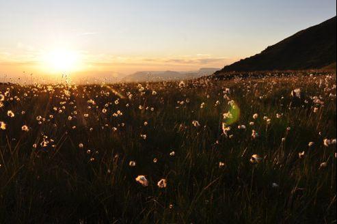 Réchauffement climatique : menace sur la flore des Alpes