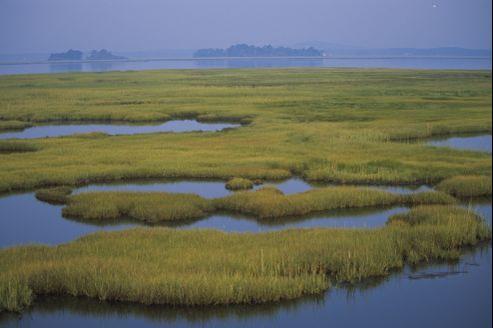 Les zones humides jouent un rôle majeur pour la biodiversité, le climat et le cycle de l'eau.