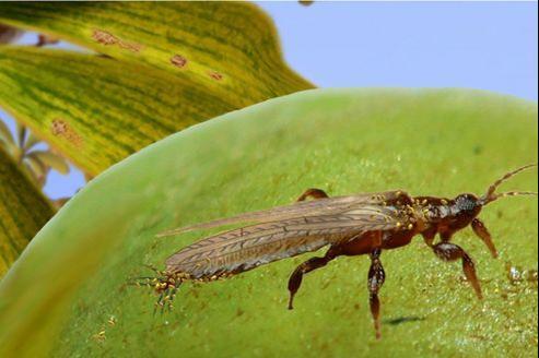 Découverte du plus ancien pollinisateur