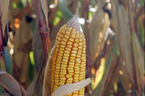 Les agriculteurs américains ont l'impression d'avoir été floués par les semenciers qui leur avaient dit qu'avec les OGM résistants aux herbicides ils n'auraient plus jamais de problèmes avec les mauvaises herbes.