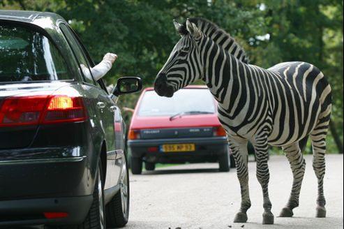 Plus de euros d tourn s au zoo de thoiry for Parc animalier yvelines