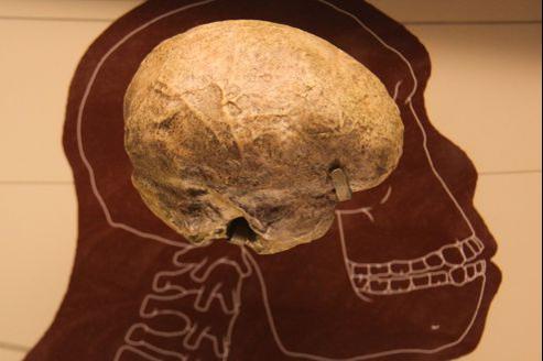 Un moulage du cerveau d'Homo rudolfensis présenté dans un musée à Washington DC. (crédits photo: Tim Evanson)