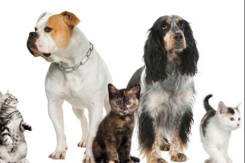 Les vices rédhibitoires chez le chien et le chat: une affaire de délai.