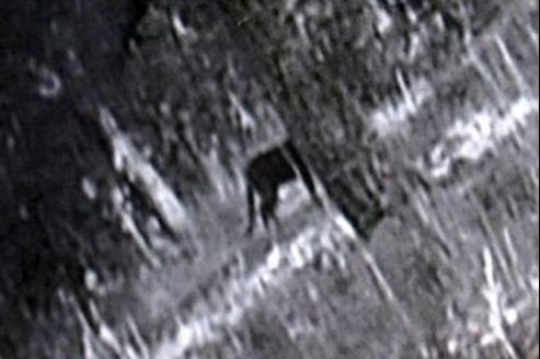 Capture d'écran d'une vidéo amateur de la prétendue panthère noire rôdant dans les Alpes-de-Haute-Provence.