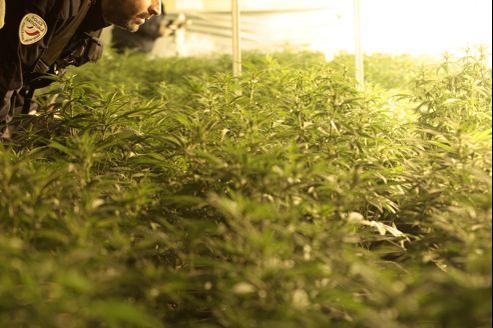 250 tonnes de cannabis sont consommées chaque année en France, ce qui représente un chiffre d'affaires d'environ un milliard d'euros.