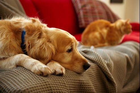 Pour les chiens et chats la solitude est difficile à supporter.