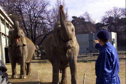 Les éléphantes du parc de la Tête d'Or en 2001.