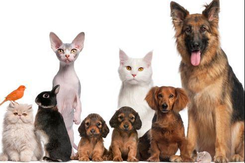 Pensez aussi à prendre de bonne résolutions pour le bien-être de votre animal de compagnie en 2013.