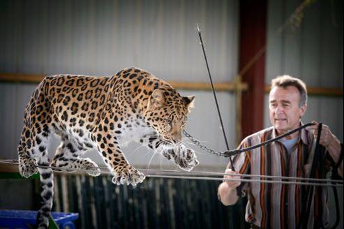 Thierry travaille ici avec son léopard Damoo, l'une de ses trois panthères ayant tourné dans l'Odyssée de Cartier, petit joyau publicitaire, gratifié du grand prix du luxe.