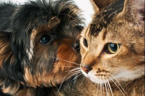 Tous les ans, une lettre de l'alphabet est proposée pour nommer les animaux de Compagnie.