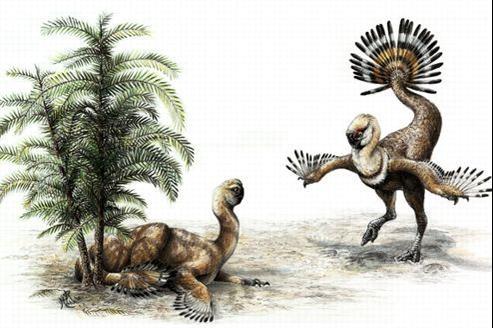 Les oviraptors, ancêtres des oiseaux, avaient la possibilité de redresser leur plumage.