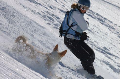 Quelles sont les mesures à suivre pour partir sereinement aux sport d'hiver avec son chien.