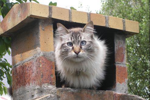 Tigrou, le chat fugueur.