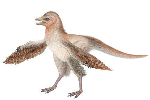 Gros comme un pigeon, le dinosaure découvert en Chine avait une sorte de duvet sur la queue et sur une grande partie du corps.