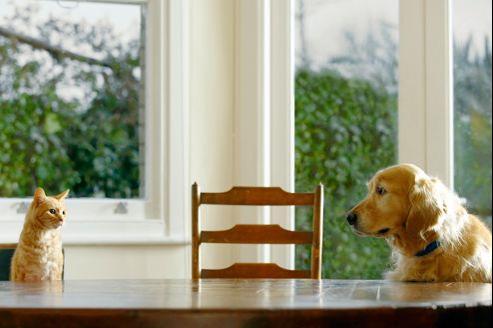 Le diabète chez les chiens et chats nécessite un traitement à vie.