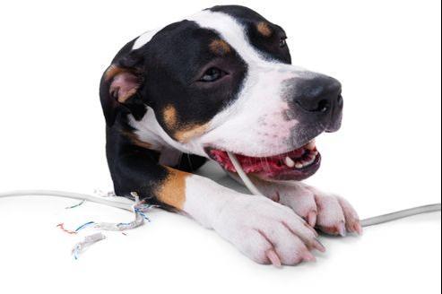 L'électrocution: un danger méconnu pour les animaux de compagnie.