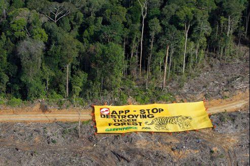 Une bannière déposée par des militants de Greenpeace, en août 2010, qui appelait APP à cesser tout abattage dans la forêt de Bukit Tigapuluh.