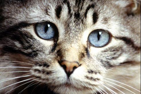 Quels sont les facteurs qui déclenchent l'hypertension artérielle chez le chat?