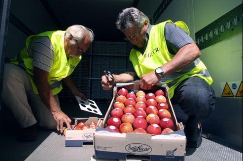Des agents de la DGCCRF examinent une cargaison de fruits en provenance d'Espagne.