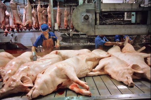 Préparation et découpe de cochons dans un abattoir de Bretagne.