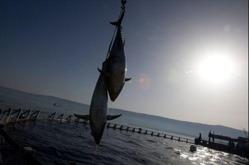 Lorsqu'il n'y a pas de cannibalisme entre espèces, les risques d'ESB sont négligeables, estiment les experts.