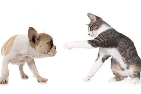 Comment protéger votre animal des vers?