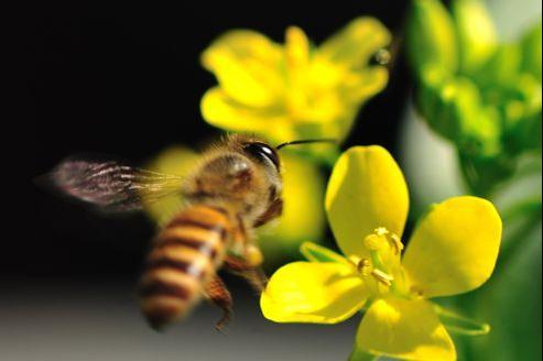 Le courant (électrique) passe entre les fleurs et les abeilles