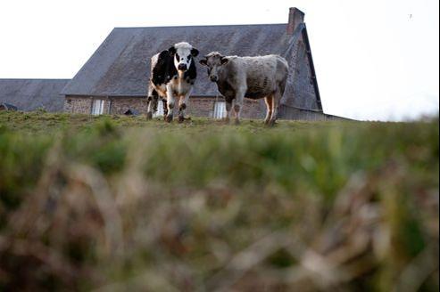 La France est devenue le premier producteur de viande de bœuf de l'Europe.