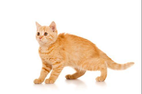 Quelles sont les solutions pour lutter contre le syndrome du «chat bouché»?