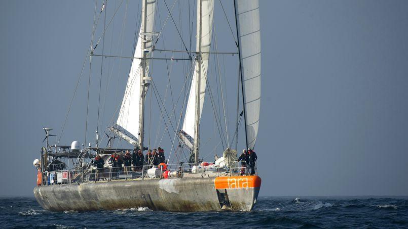 bateau tara