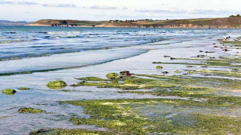 Des algues vertes sur une plage du Finistère, en septembre 2010.