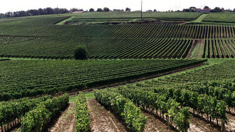 Les vignes touchées concernent de petites appellations, bordeaux, bordeaux supérieur, entre-deux-mers, et une centaine de viticulteurs.