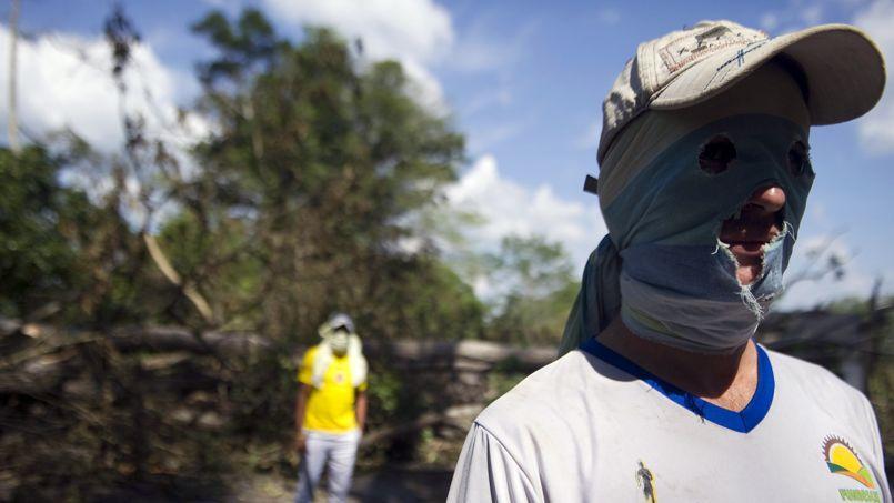 Dans la région de Catatumbo, les cultivateurs de la feuille de coca protestent contre le plan gouvernemental d'éradication de leurs cultures.