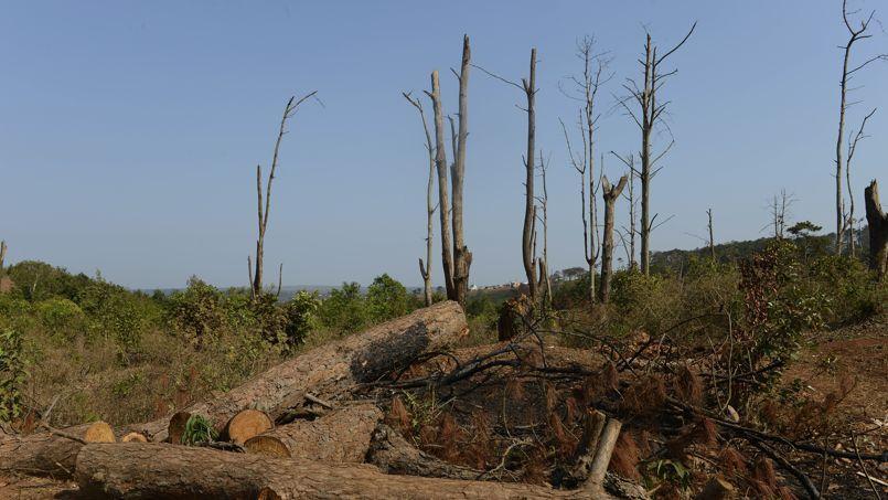 La déforestation annuelle mondiale représente un peu plus de huit millions d'hectares.