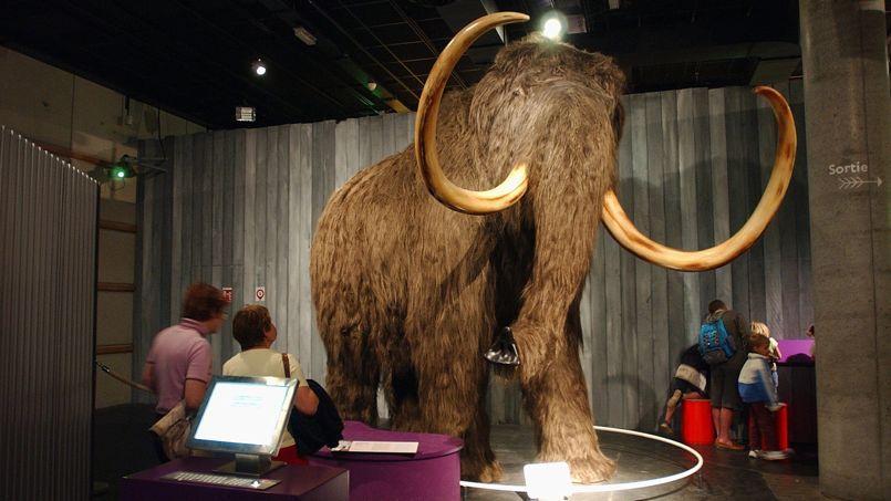 Il y a 100.000 ans, le mammouth américain aurait envahi la Sibérie et l'Europe