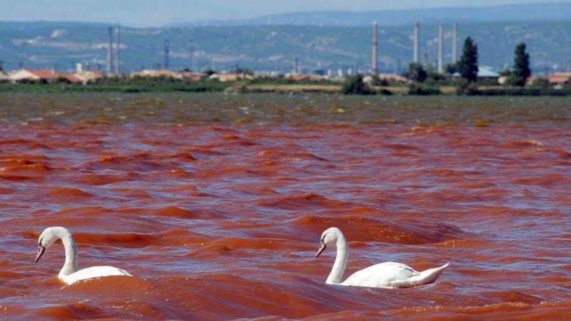 Des cygnes évoluent le 29 juillet 2013 sur l'étang de Bolmon près de Marignanne, pollué par de la bauxite