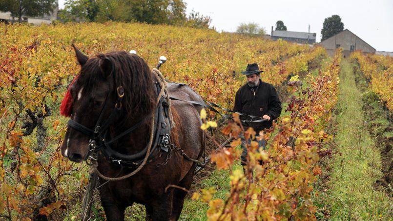 En 2009, Olivier Cousin a délaissé son tracteur pour un cheval de trait.