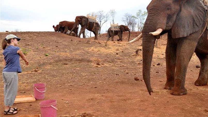 L'éléphant comprend ce qu'on lui pointe du doigt