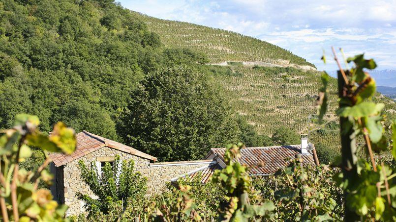 Le gîte les Granits: le charme d'une ancienne maison de vignerons. (Chapoutier)